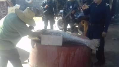 Detienen a 4 personas en embarcación con partes de pez totoaba