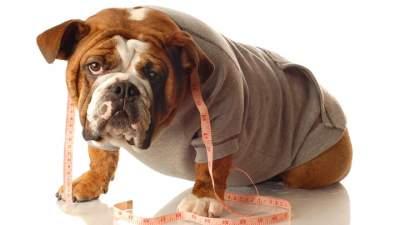 Mascotas obesas, 'ni graciosas ni saludables': especialista UNAM