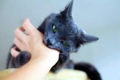 Revelan primer muerte por virus SFTSV tras mordedura de gato
