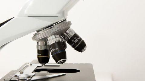 Investigadores mexicanos desarrollan un extracto de chayote contra el cáncer