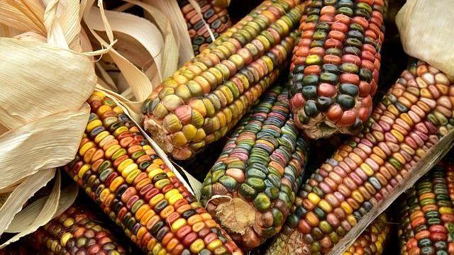 Diez bebidas mexicanas tradicionales elaboradas con maíz
