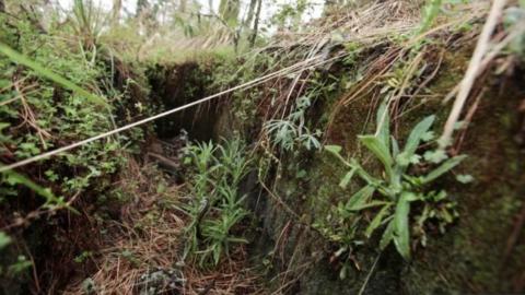 Viven 12 millones de personas en precariedad en regiones forestales