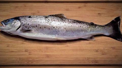 ¿Es bueno comer pescado diario?