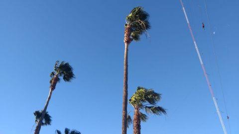 Caen anuncios, postes y árboles por viento