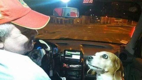 Princesa, la tierna perrita que 'trabaja' como taxista