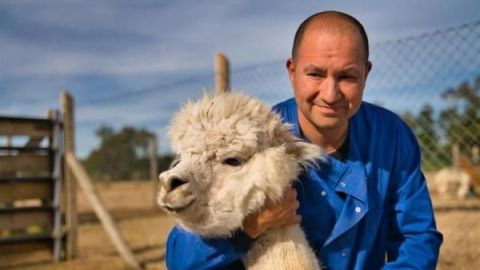 Las alpacas podrían ser la clave para derrotar al coronavirus 😱