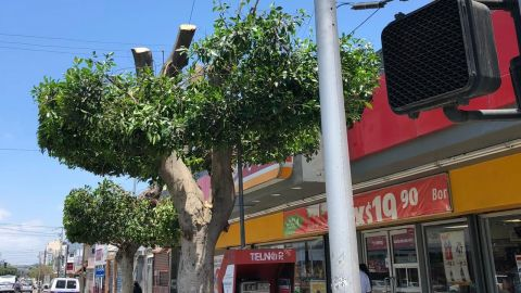 Sanción a OXXO por mutilar árbol