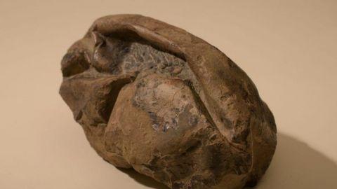 ¡ALUCINANTE! - Descubren el fósil del HUEVO MÁS GRANDE de DINOSAURIO 😱