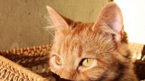 ⚠️ ¡Otro virus de murciélago! 😧 un gato se lo transmitió a su dueña