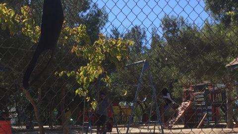 No respetan acordonamientos de juegos infantiles en parque de la amistad