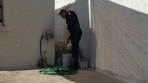 VIDEO: Rescatan a perro de morir de  deshidratación