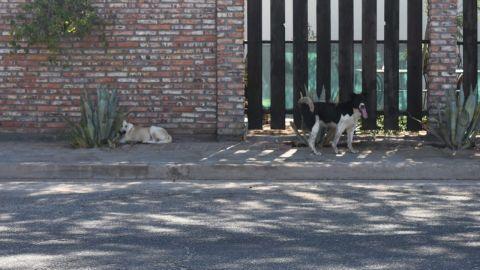 Mascotas y perros de la calle están en riesgo de muerte