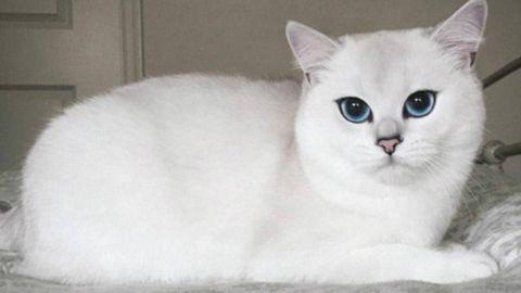 VIDEO: Un gato hipnotiza a la Red al mover su cabeza al ritmo de la música