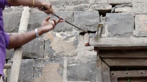 VIDEO: Encuentra una COBRA viviendo en los muros de su casa