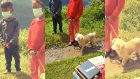 Perro es llevado a vacunar... con cubrebocas