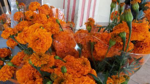 Florerías sin ventas este día de muertos en Mexicali