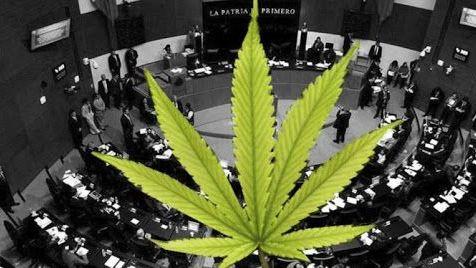 Legalizar marihuana no combatirá crimen organizado: diputado yucateco