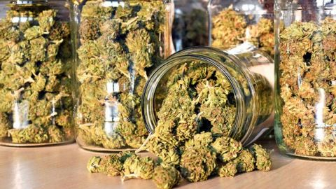Además de uso médico y lúdico, habrá marihuana para uso textil: CNA