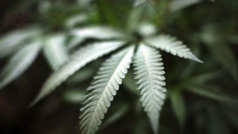 SCJN avala prórroga de diputados para discutir tema de la marihuana