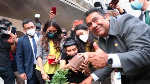 Diputado de Morena siembra planta de marihuana en Cámara de Diputados