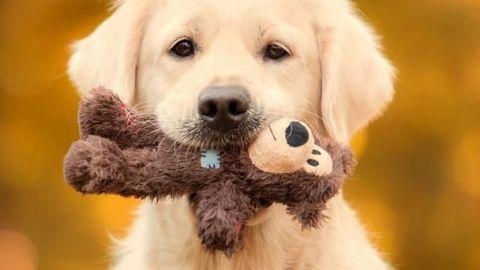 Perros harán pruebas de detección de Covid-19