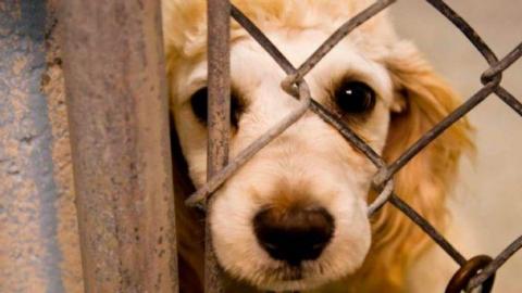 Animales ya no serán considerados como cosas en Nuevo León