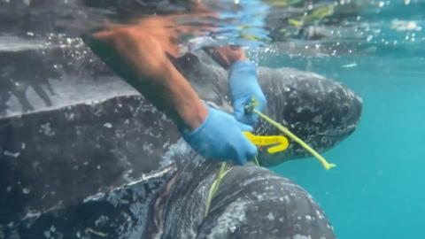 Personal de Marina participa en la protección de la tortuga
