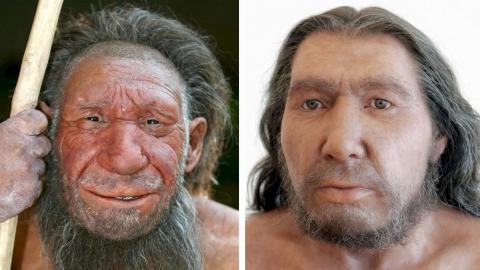 Tus genes neandertal pueden salvarte del Covid-19, según estudio