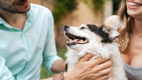Estudio revela que las parejas prefieren tener perros en lugar de hijos