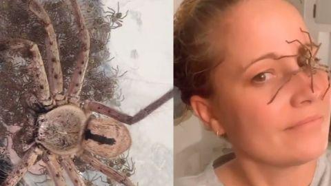 Ayuda a una araña gigante a dar a luz a 200 crías; increíble video se hace viral