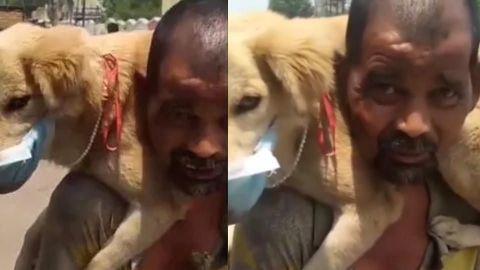 """""""¡No lo dejaría morir!"""": Le pone su ÚNICO cubrebocas a su perro para protegerlo"""