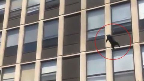 Gatito salta desde el quinto piso de un edificio en llamas y cae de pie