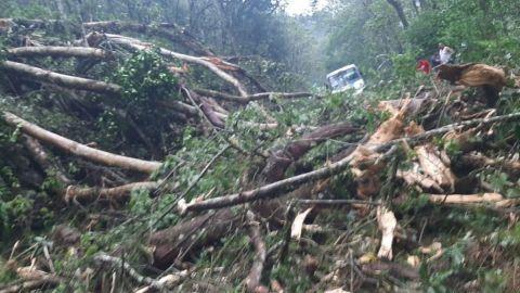 Lluvias dejan árboles caídos y afectaciones en 13 municipios en Veracruz