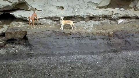 Descartan usar helicóptero para rescatar a perritos de socavón