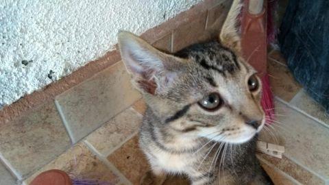 Covid 19 afecta hasta a las mascotas: hay más abandono de perros y gatos