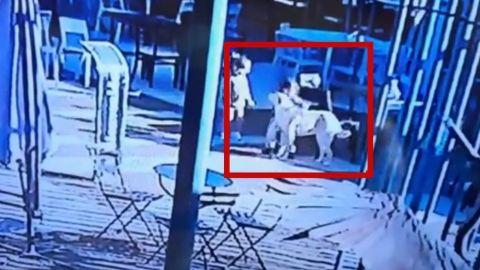 Padre de familia mata a perrito de una patada para salvar a su hijo