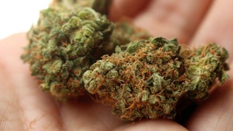 Se podrá consumir libremente marihuana en Tijuana