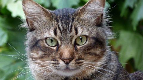 Personas se contagian de covid-19 tras asistir a fiesta de cumpleaños de un gato