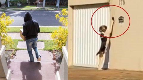 Sonaba el timbre todos los días; pusieron cámaras y vieron que era un perro