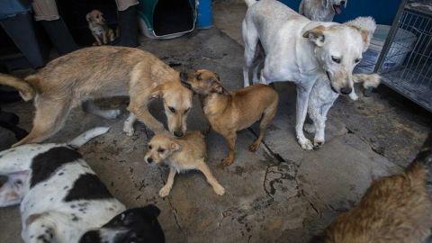 Hombre viola a perro; es grabado y esperan que pague por lo que hizo