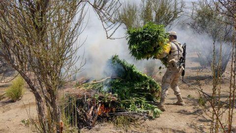 Ejército destruye plantíos de marihuana en Baja California