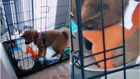 📹 VIRAL: ¡Su amigo fiel! Perro lleva a su peluche a tomar agua