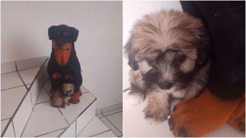 VIDEO: Cachorro confunde a su mamá con alcancía con forma de perro
